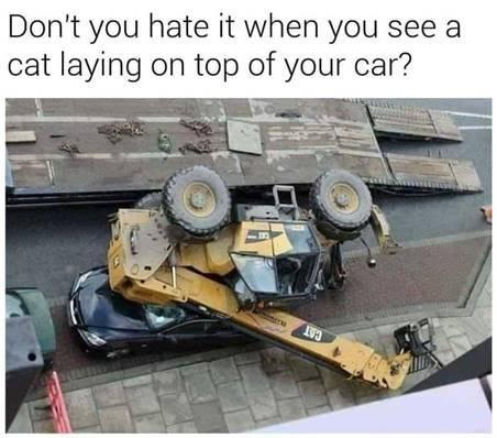 cat on car